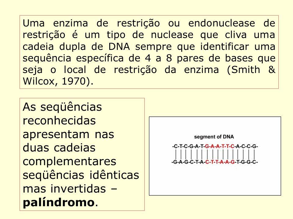 Enzimas de restrição Uma enzima de restrição ou endonuclease de restrição é um tipo de nuclease que cliva uma cadeia dupla de DNA sempre que identific