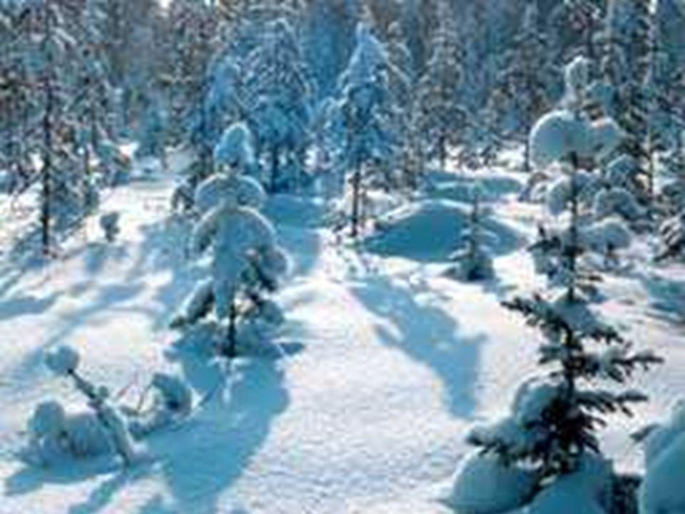 Apresenta-se no centro - norte canadense. Seus invernos são rigorosos e prolongados, fornecendo a formação de florestas Taiga.