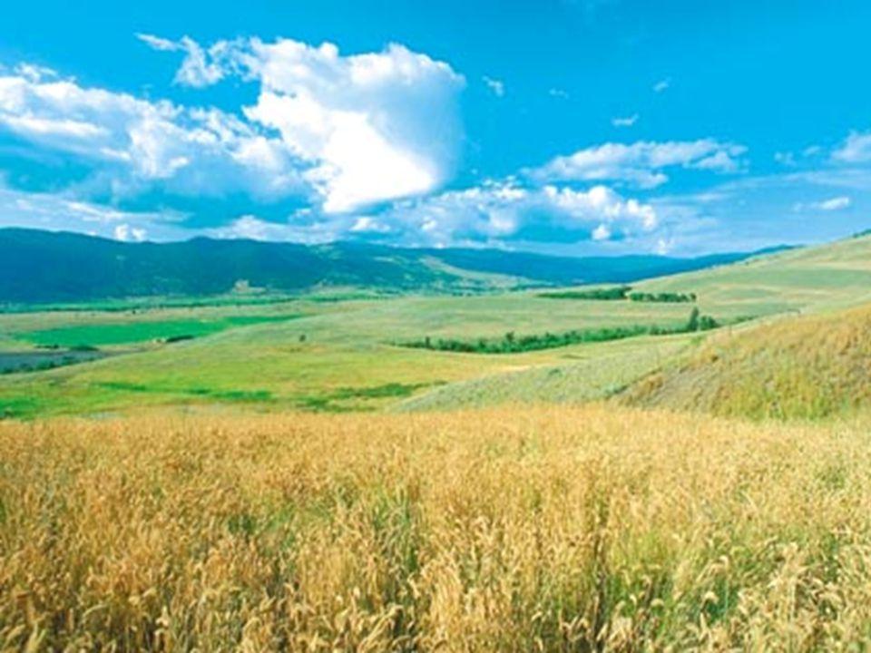 Apresenta-se no centro dos EUA,Canadá,Argentina. Tem 4 estações bem definidas: no verão há pouca chuvas; e o inverno é frio e seco,favorece a formação