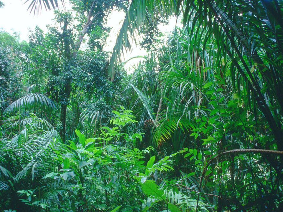 Apresenta-se no centro-norte da América do sul. Quente, tem pequena amplitude térmica,favorece a formação de florestas latifoliadas.