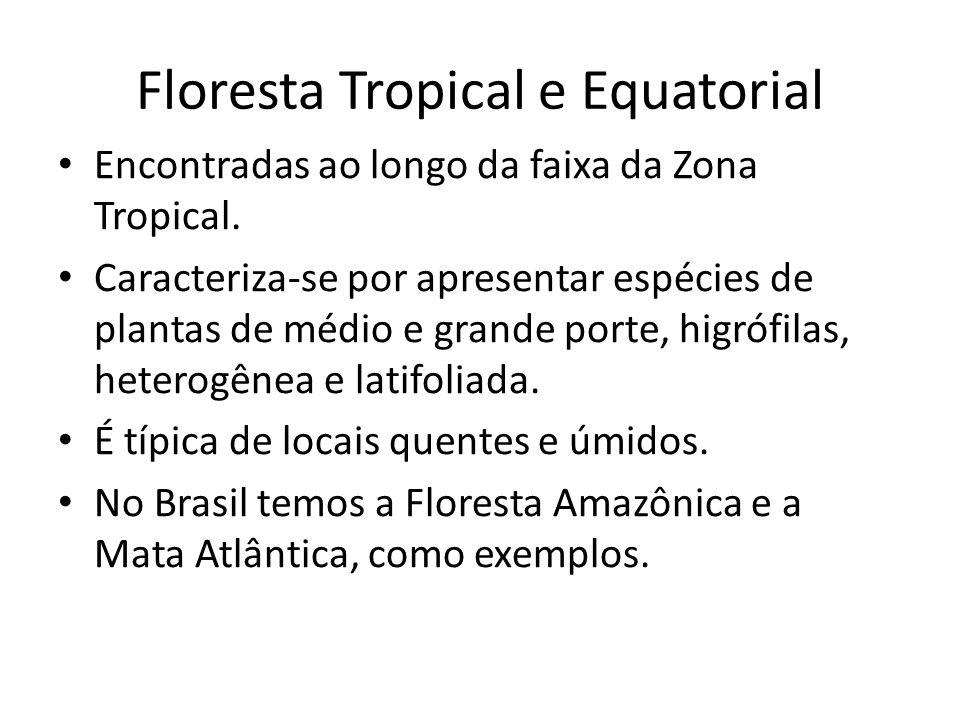 Floresta Tropical e Equatorial Encontradas ao longo da faixa da Zona Tropical.