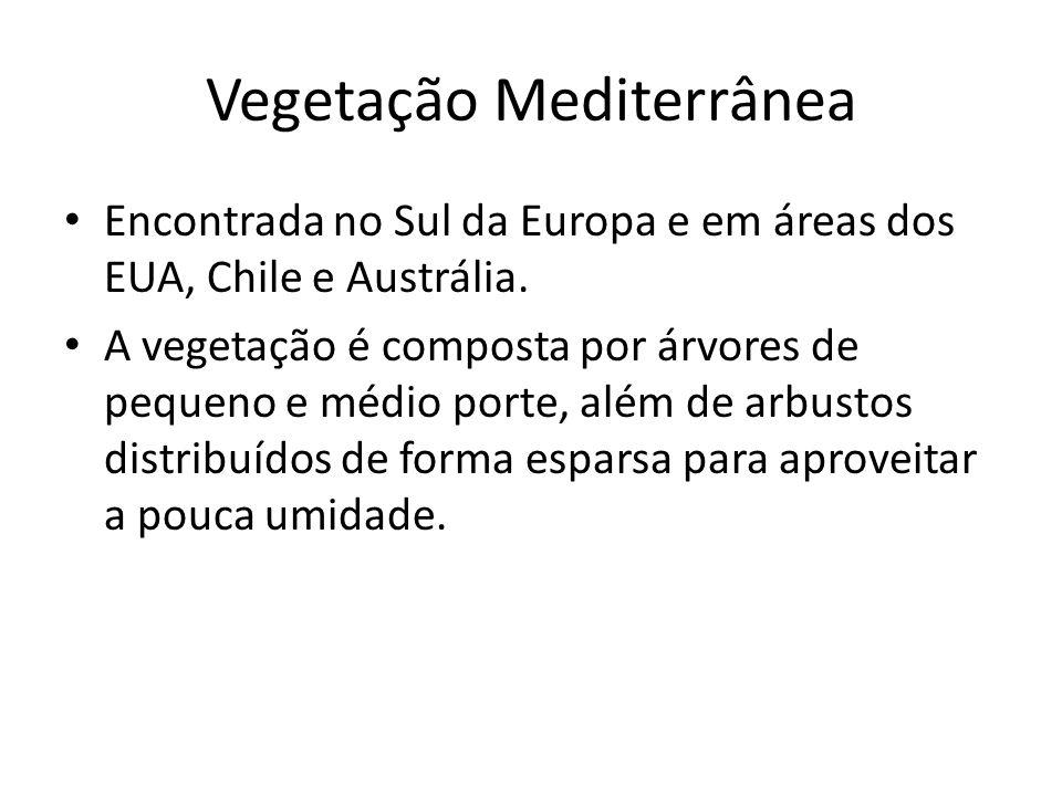 Vegetação Mediterrânea Encontrada no Sul da Europa e em áreas dos EUA, Chile e Austrália.