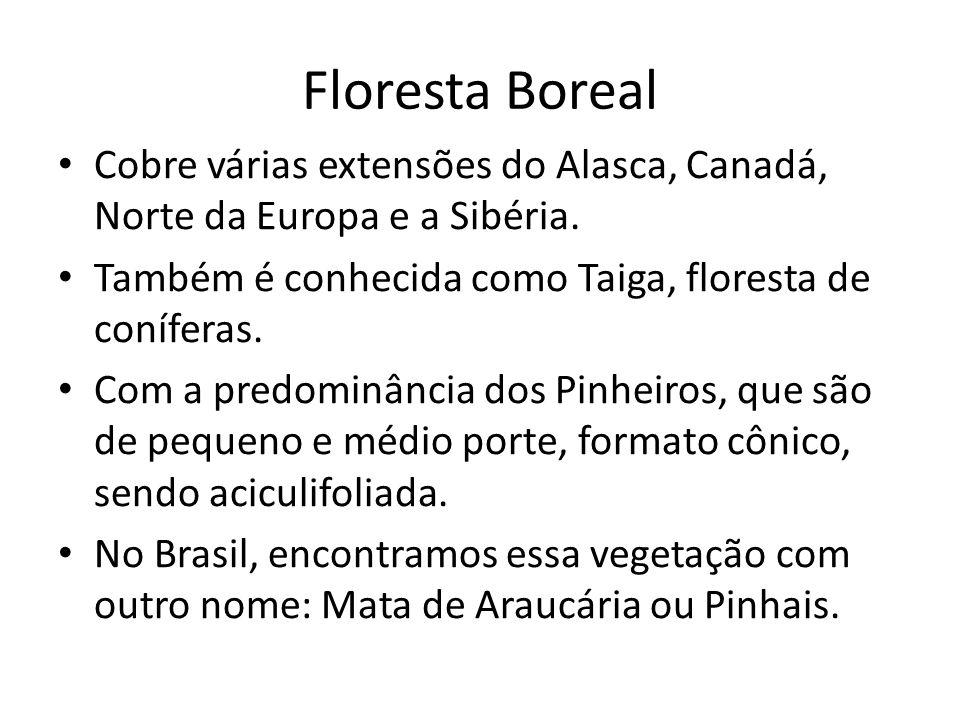 Floresta Boreal Cobre várias extensões do Alasca, Canadá, Norte da Europa e a Sibéria.