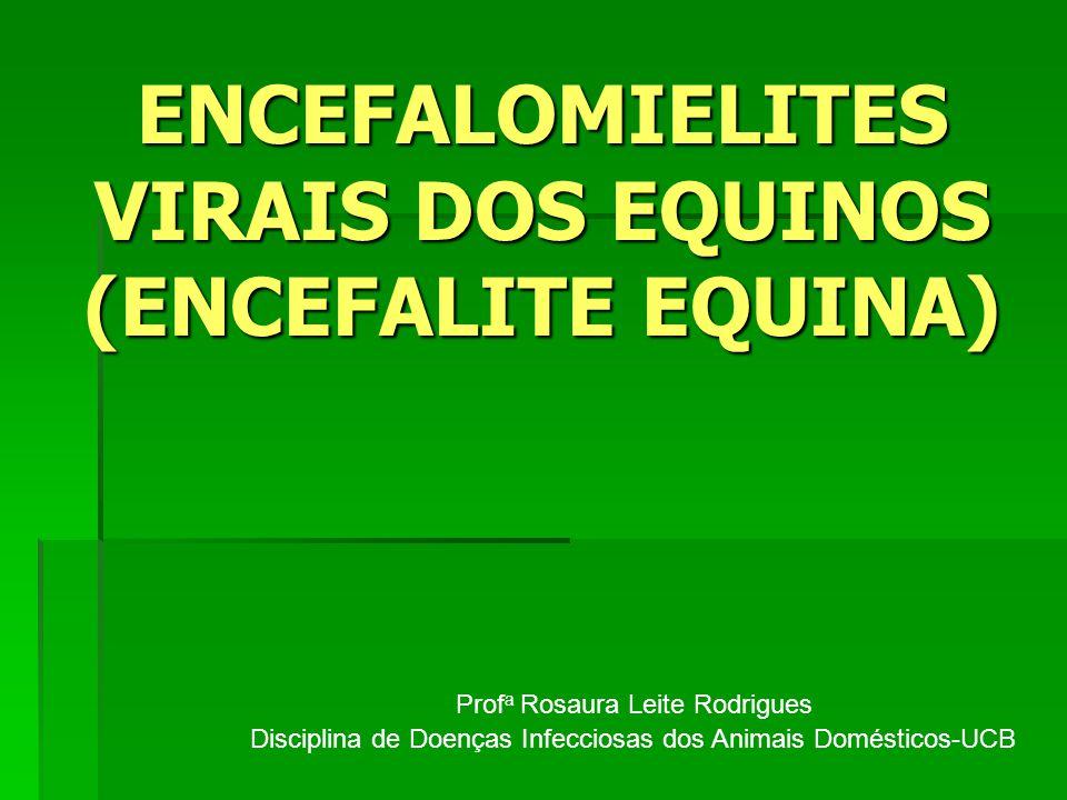 ENCEFALOMIELITES VIRAIS DOS EQUINOS (ENCEFALITE EQUINA) Prof a Rosaura Leite Rodrigues Disciplina de Doenças Infecciosas dos Animais Domésticos-UCB