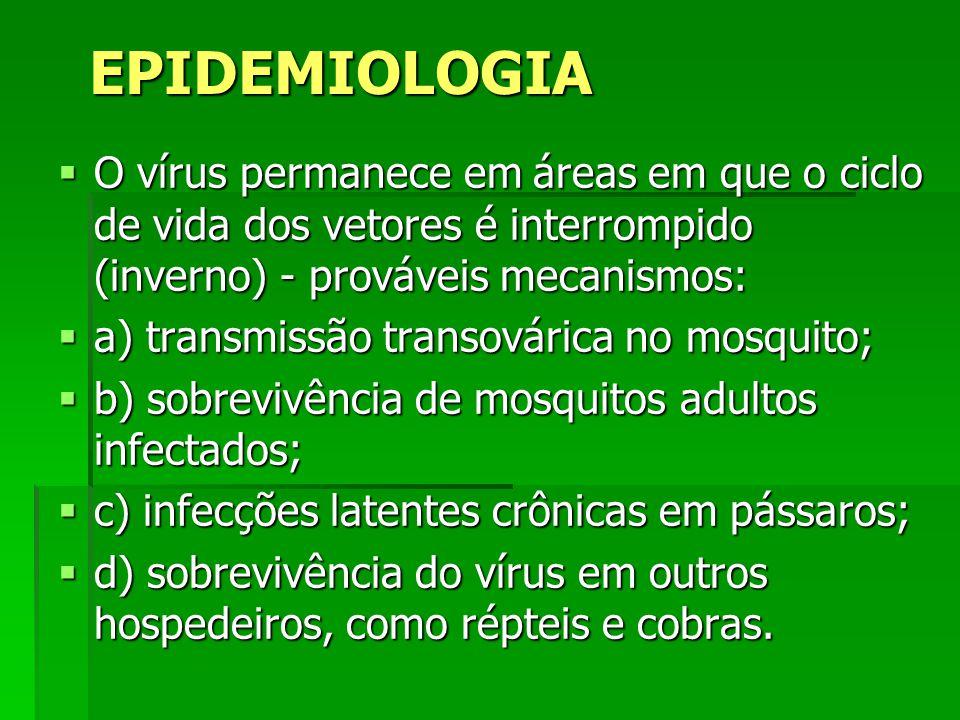 EPIDEMIOLOGIA O vírus permanece em áreas em que o ciclo de vida dos vetores é interrompido (inverno) - prováveis mecanismos: O vírus permanece em área