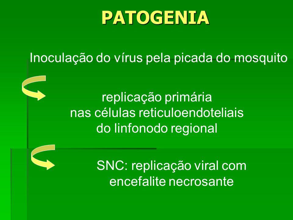 PATOGENIA Inoculação do vírus pela picada do mosquito replicação primária nas células reticuloendoteliais do linfonodo regional SNC: replicação viral