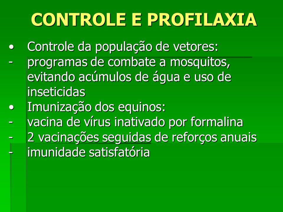 CONTROLE E PROFILAXIA Controle da população de vetores:Controle da população de vetores: -programas de combate a mosquitos, evitando acúmulos de água
