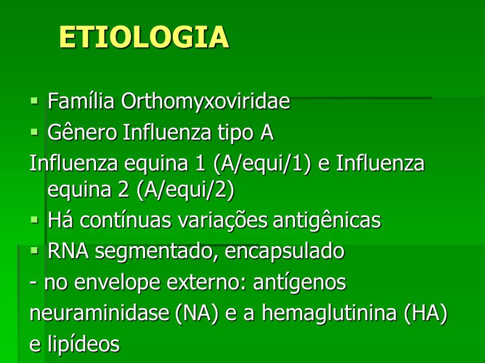 ETIOLOGIA Família Orthomyxoviridae Família Orthomyxoviridae Gênero Influenza tipo A Gênero Influenza tipo A Influenza equina 1 (A/equi/1) e Influenza