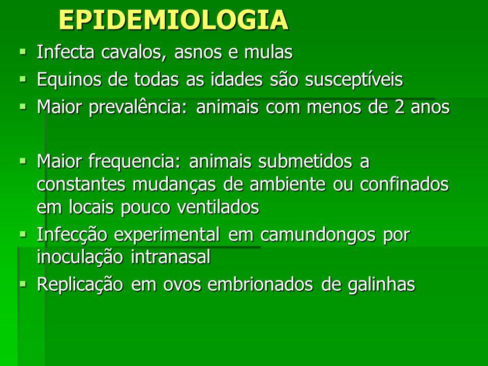 EPIDEMIOLOGIA Infecta cavalos, asnos e mulas Infecta cavalos, asnos e mulas Equinos de todas as idades são susceptíveis Equinos de todas as idades são