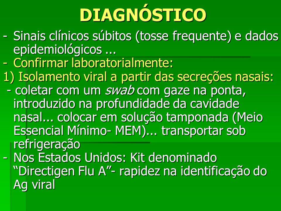 DIAGNÓSTICO -Sinais clínicos súbitos (tosse frequente) e dados epidemiológicos... -Confirmar laboratorialmente: 1) Isolamento viral a partir das secre