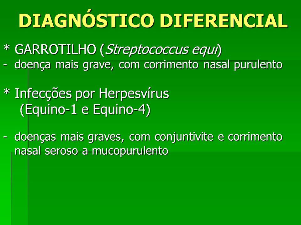 DIAGNÓSTICO DIFERENCIAL * GARROTILHO (Streptococcus equi) -doença mais grave, com corrimento nasal purulento * Infecções por Herpesvírus (Equino-1 e E