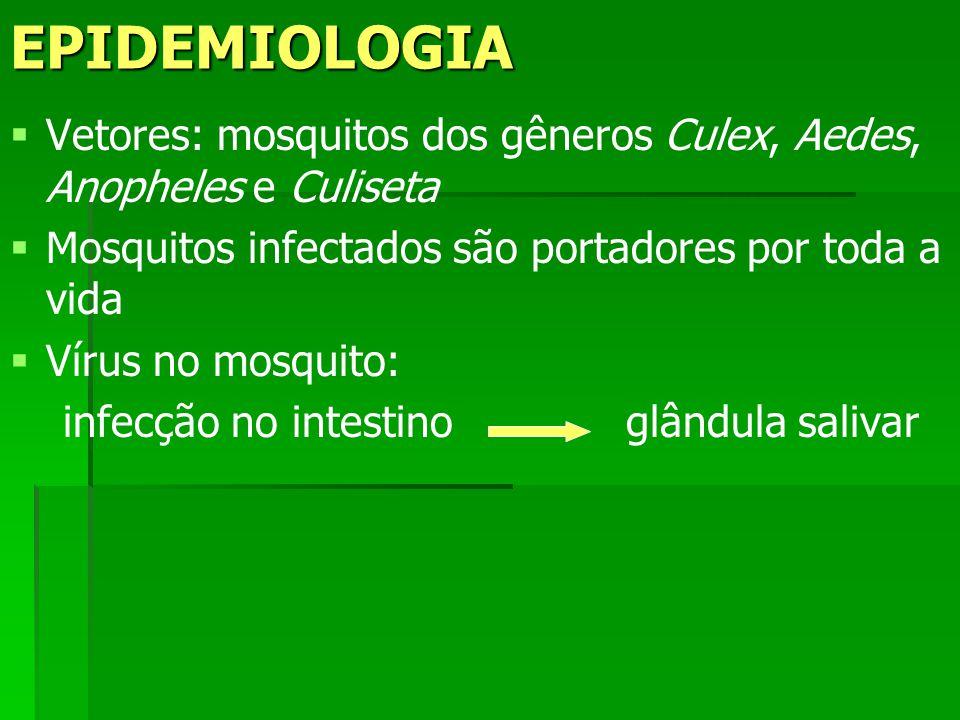 EPIDEMIOLOGIA Vetores: mosquitos dos gêneros Culex, Aedes, Anopheles e Culiseta Mosquitos infectados são portadores por toda a vida Vírus no mosquito: