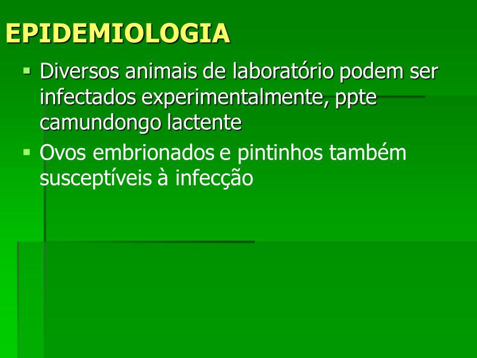 Diversos animais de laboratório podem ser infectados experimentalmente, ppte camundongo lactente Diversos animais de laboratório podem ser infectados