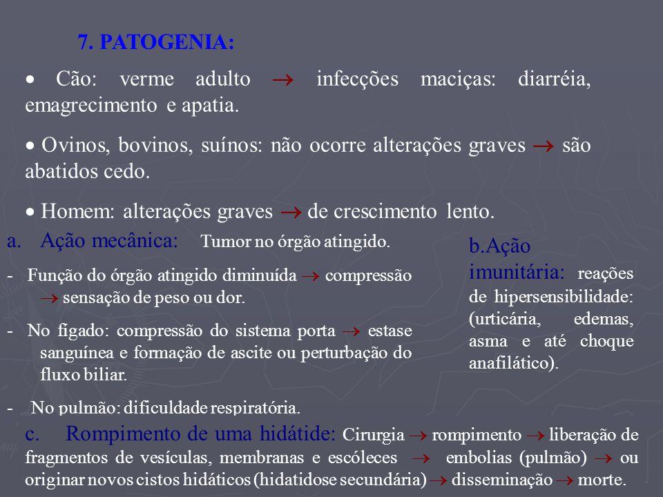 8.2 Laboratorial: - * No cão: é difícil (outras tênias que parasitam o cão possuem ovos semelhantes).