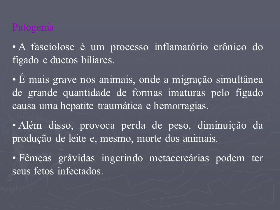 A presença dos parasitos adultos dentro dos ductos biliares, em movimentação constante e possuindo espinhos na cutícula, provocam ulcerações e irritações do endotélio dos ductos, levando a uma hiperplasia epitelial.