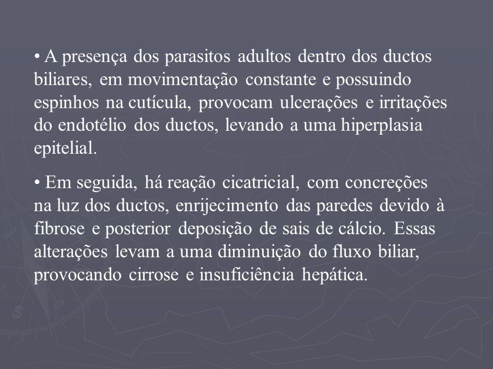 Epidemiologia: A fasciolose é uma zoonose na qual as fontes de infecção para o homem são as formas larvárias provenientes de caramujos, infectados principalmente por miracídios provenientes de ovos expelidos juntos com fezes de ovinos e bovinos.