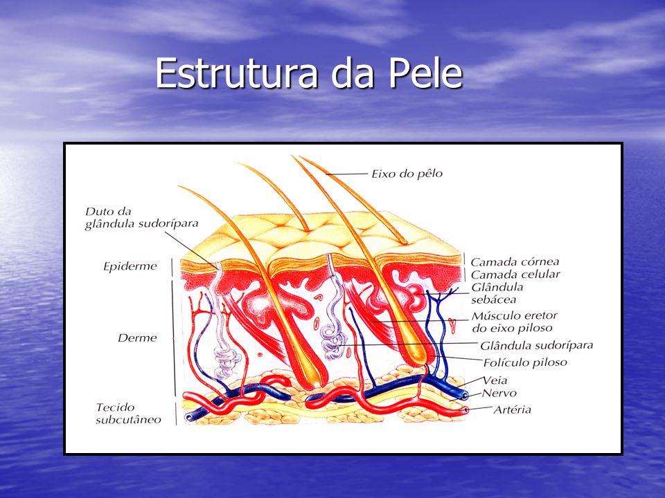 Estrutura da Pele Estrutura da Pele