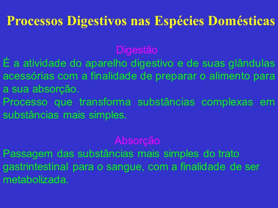 Digestão nos Ruminantes Boca – minerais (bicarbonato e uréia), mucina Rúmen - Degradação microbiana e física do alimento, Síntese microbiana (bactérias, protozoários e fungos) Abomaso - HCl, Pepsina, mucina Pâncreas - RNAase, DNAase I, DNAase II, Bicarbonato, lipases, proteases pancreáticas, -amylases Intestinos - Trisina, DNAase, eletrólitos, muco, macrófagos, fagócitos