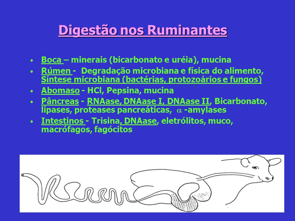 Digestão nos Ruminantes Boca – minerais (bicarbonato e uréia), mucina Rúmen - Degradação microbiana e física do alimento, Síntese microbiana (bactéria