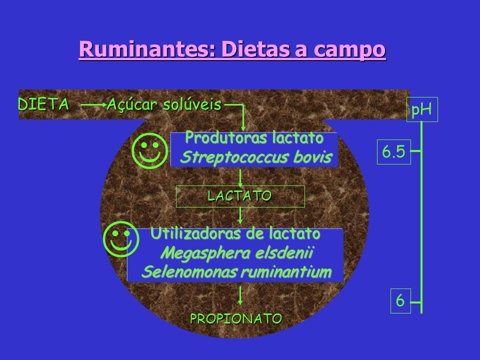 6 6.5 pH Açúcar solúveis Produtoras lactato Streptococcus bovis DIETA Ruminantes: Dietas a campo LACTATO Utilizadoras de lactato Megasphera elsdenii S