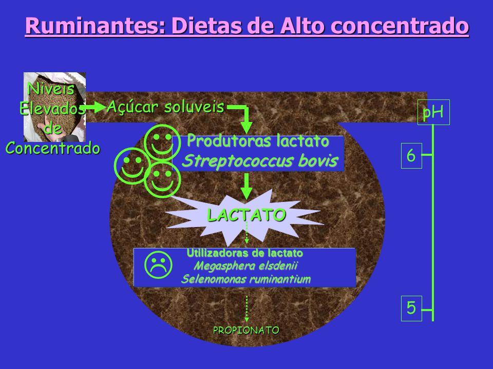 NiveisElevadosdeConcentrado 5 6 pH LACTATO Utilizadoras de lactato Megasphera elsdenii Selenomonas ruminantium PROPIONATO Açúcar soluveis Produtoras l
