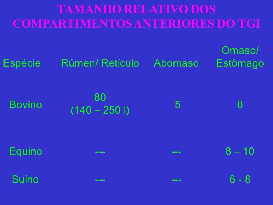 TAMANHO RELATIVO DOS COMPARTIMENTOS ANTERIORES DO TGI EspécieRúmen/ RetículoAbomaso Omaso/ Estômago Bovino 80 (140 – 250 l) 5 8 Equino --- 8 – 10 Suín