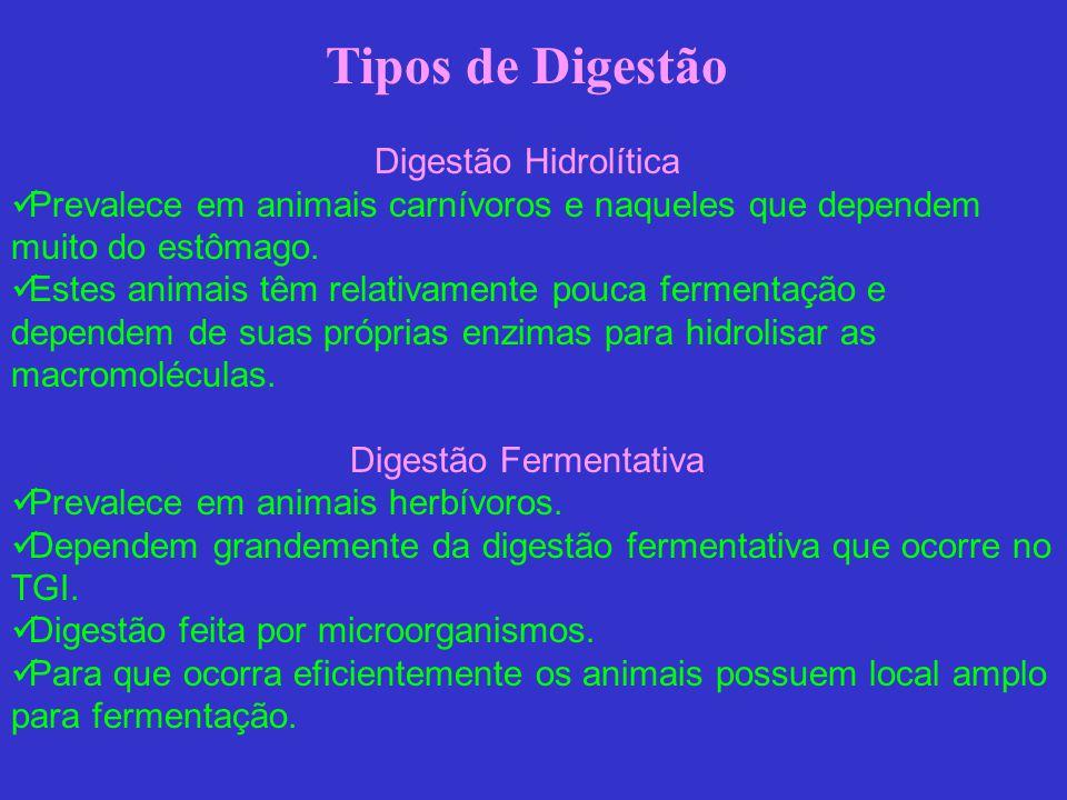 Tipos de Digestão Digestão Hidrolítica Prevalece em animais carnívoros e naqueles que dependem muito do estômago. Estes animais têm relativamente pouc