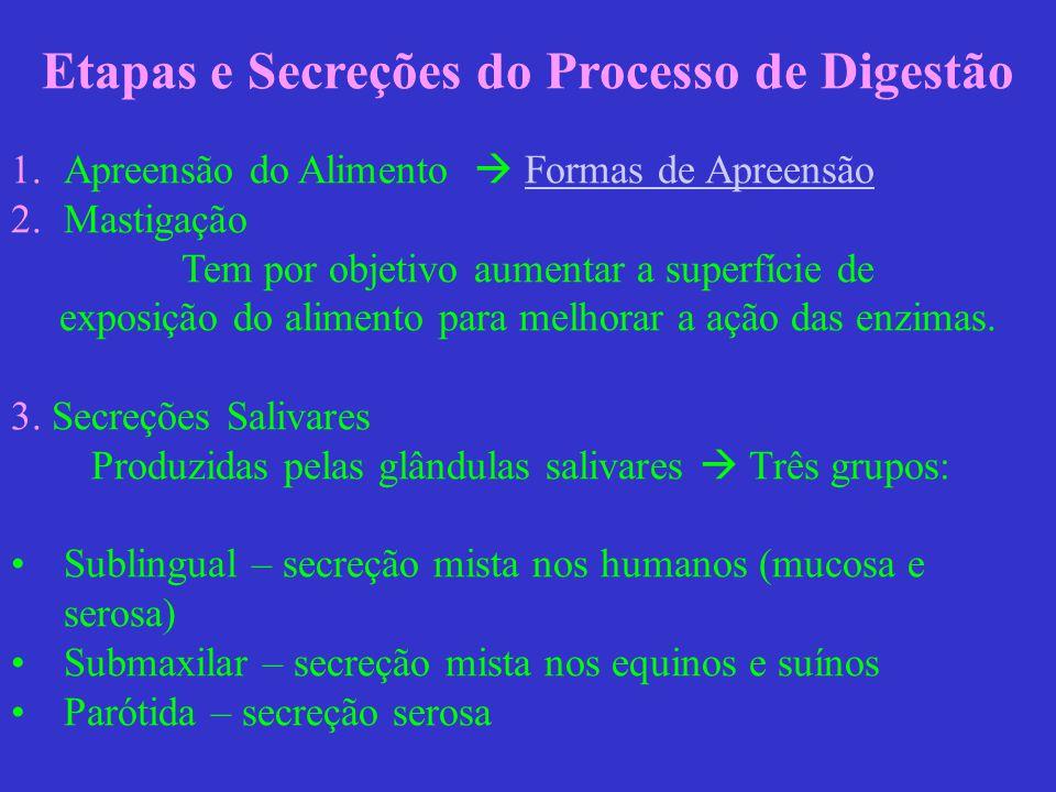 Etapas e Secreções do Processo de Digestão 1.Apreensão do Alimento Formas de Apreensão Formas de Apreensão 2.Mastigação Tem por objetivo aumentar a su