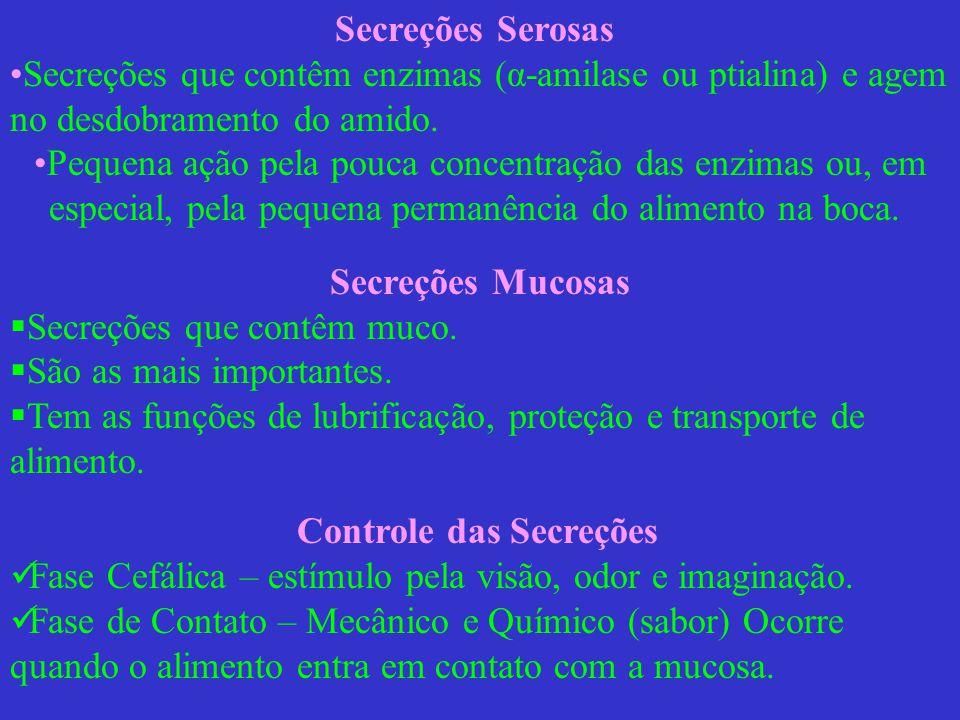 Secreções: Diferenças entre as espécies Equinos – secreção da glândula parótida não é contínua.
