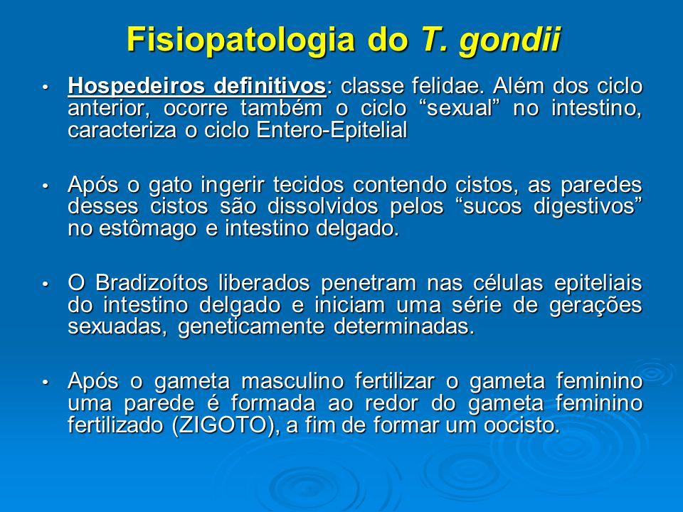 Fisiopatologia do T.gondii Hospedeiros definitivos: classe felidae.