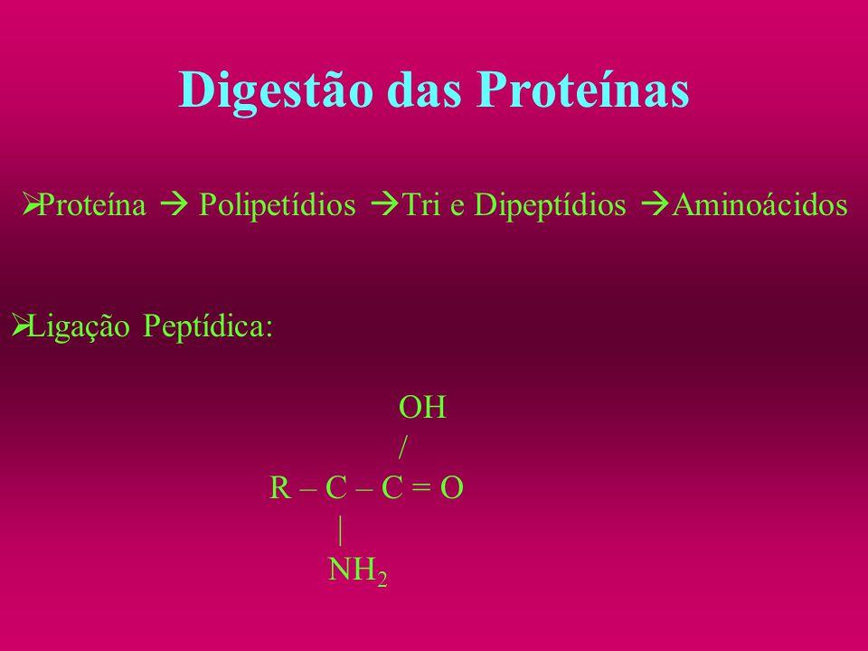 Digestão das Proteínas Proteína Polipetídios Tri e Dipeptídios Aminoácidos Ligação Peptídica: OH / R – C – C = O | NH 2
