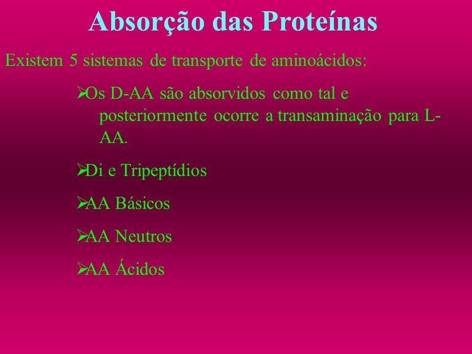 Absorção das Proteínas Existem 5 sistemas de transporte de aminoácidos: Os D-AA são absorvidos como tal e posteriormente ocorre a transaminação para L
