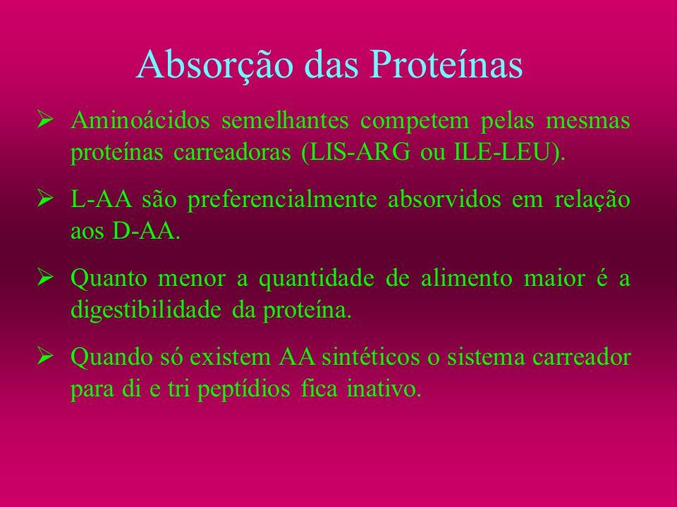 Absorção das Proteínas Aminoácidos semelhantes competem pelas mesmas proteínas carreadoras (LIS-ARG ou ILE-LEU). L-AA são preferencialmente absorvidos