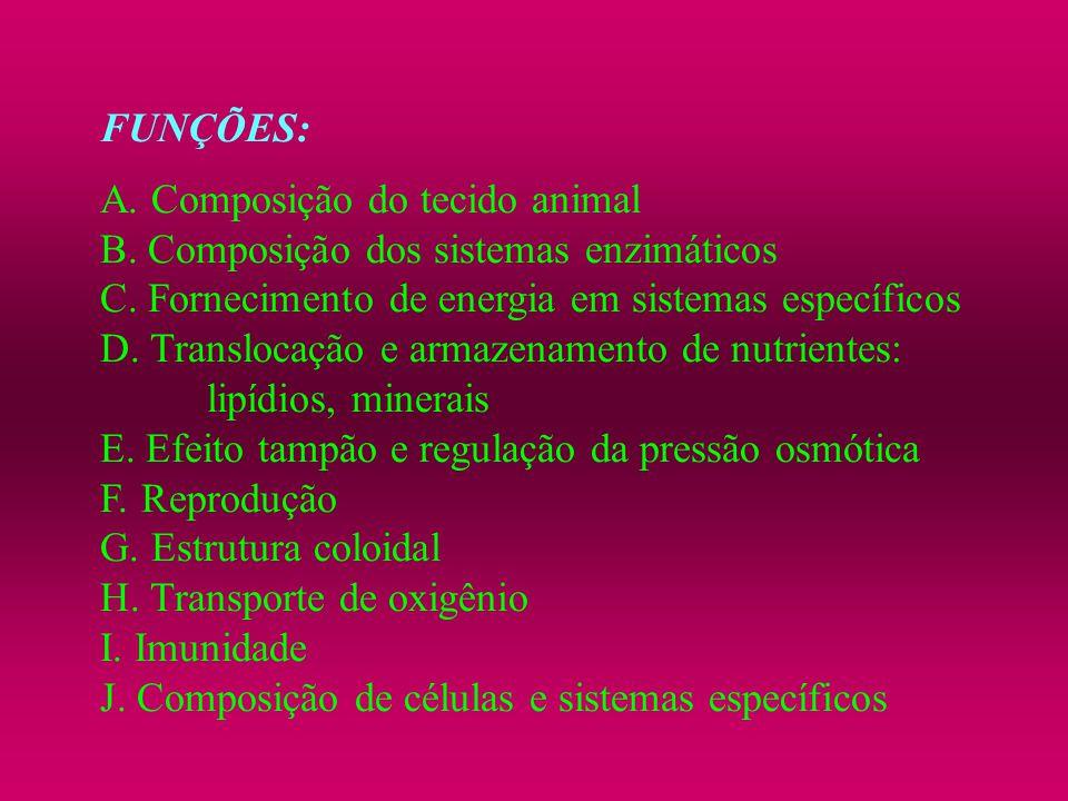 FUNÇÕES: A. Composição do tecido animal B. Composição dos sistemas enzimáticos C. Fornecimento de energia em sistemas específicos D. Translocação e ar