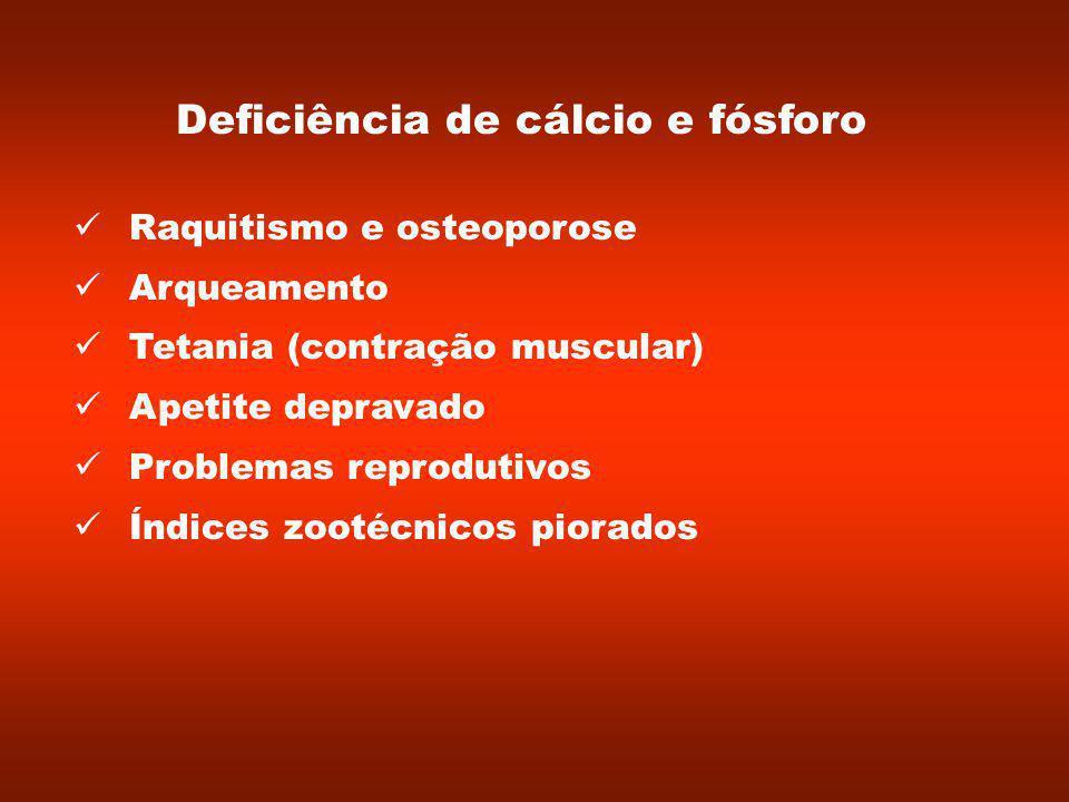 Deficiência de cálcio e fósforo Raquitismo e osteoporose Arqueamento Tetania (contração muscular) Apetite depravado Problemas reprodutivos Índices zootécnicos piorados