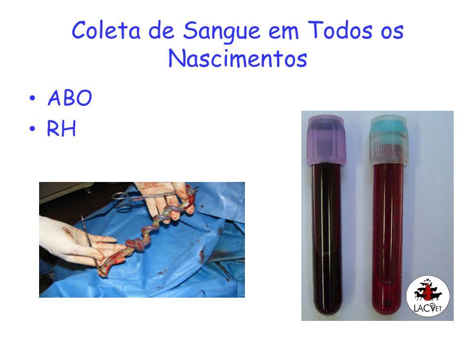 Coleta de Sangue em Todos os Nascimentos ABO RH