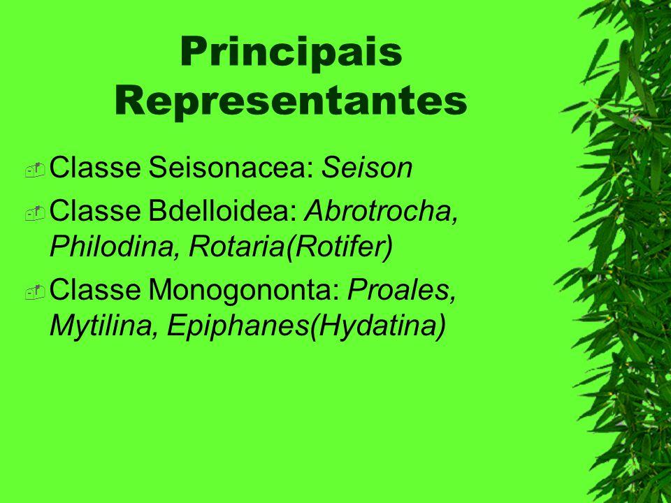 Principais Representantes Classe Seisonacea: Seison Classe Bdelloidea: Abrotrocha, Philodina, Rotaria(Rotifer) Classe Monogononta: Proales, Mytilina,