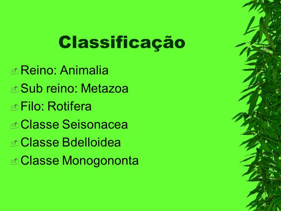 Classificação Reino: Animalia Sub reino: Metazoa Filo: Rotifera Classe Seisonacea Classe Bdelloidea Classe Monogononta