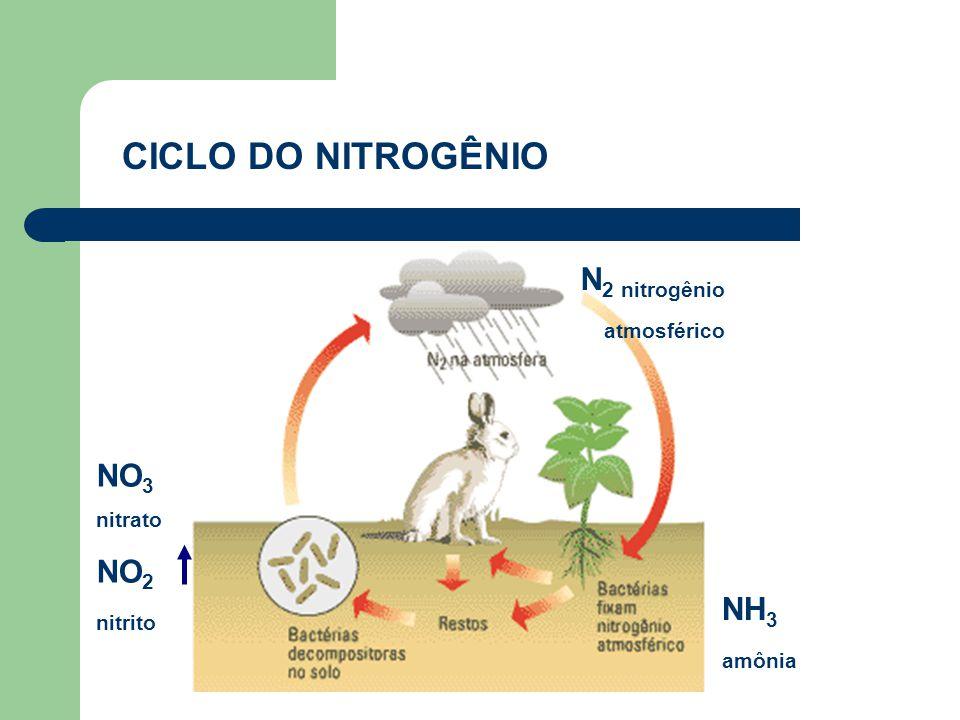 CICLO DO NITROGÊNIO NH 3 amônia NO 3 nitrato NO 2 nitrito N 2 nitrogênio atmosférico