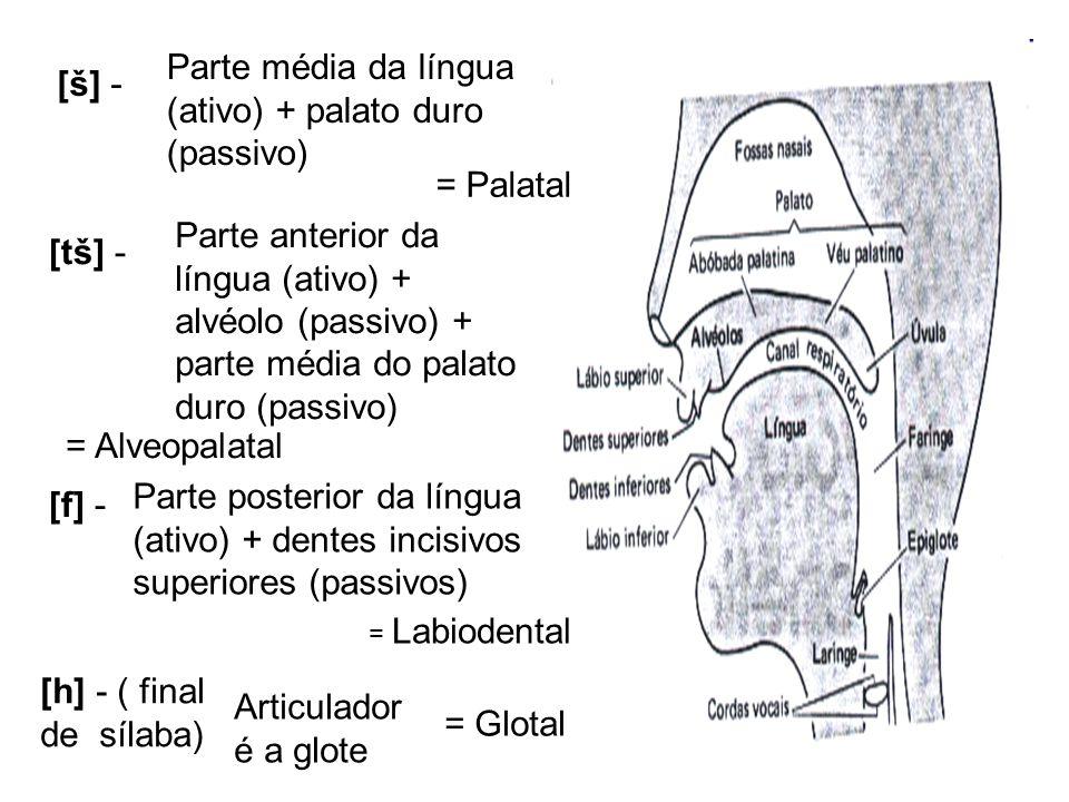 [š] - Parte média da língua (ativo) + palato duro (passivo) = Palatal [tš] - Parte anterior da língua (ativo) + alvéolo (passivo) + parte média do pal