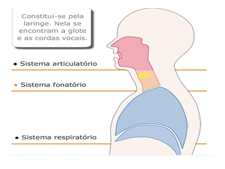 [k] Pontos de articulação: ativos e passivos (nomes são dados pelos membros passivos) - Língua (ativo) + véu (passivo)= [p] Velar - lábio inferior (móvel) + lábio superior (passivo) = Bilabial [t] ou [s] Ápice da língua (ativo) + abóbada palatina ou alvéolos (passivo) = Alveolar