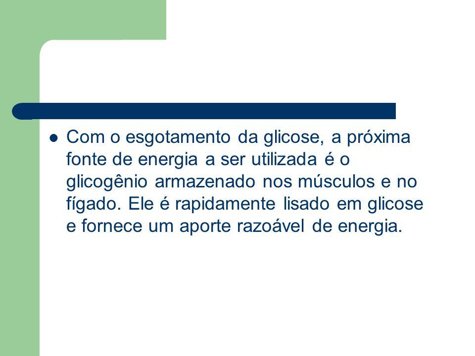 Com o esgotamento da glicose, a próxima fonte de energia a ser utilizada é o glicogênio armazenado nos músculos e no fígado. Ele é rapidamente lisado