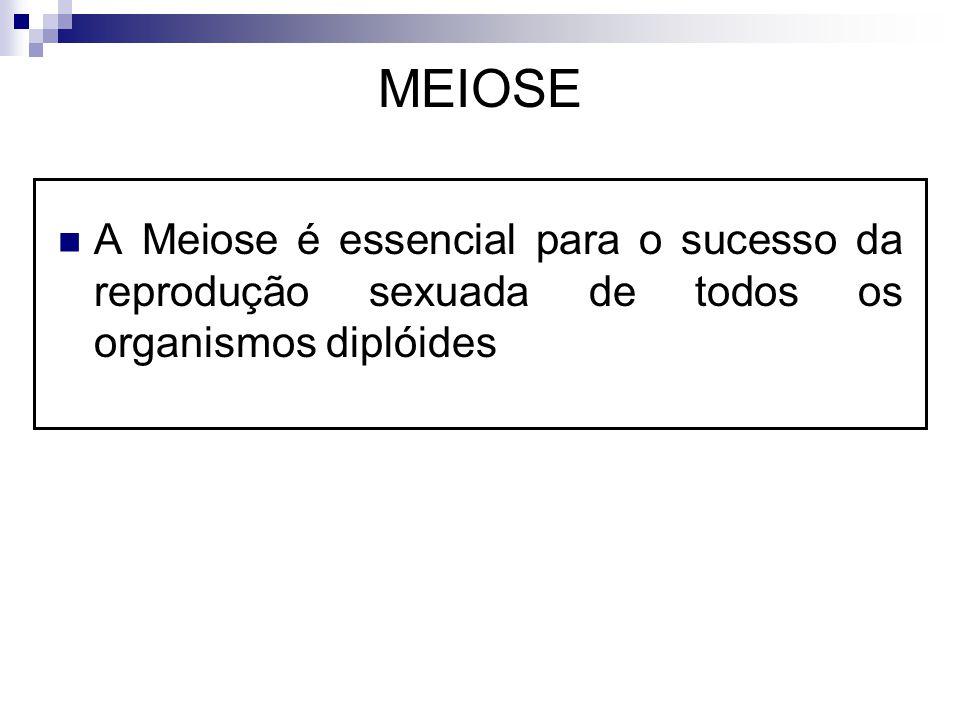 MEIOSE A Meiose é essencial para o sucesso da reprodução sexuada de todos os organismos diplóides