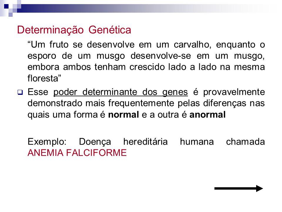 Determinação Genética Um fruto se desenvolve em um carvalho, enquanto o esporo de um musgo desenvolve-se em um musgo, embora ambos tenham crescido lad