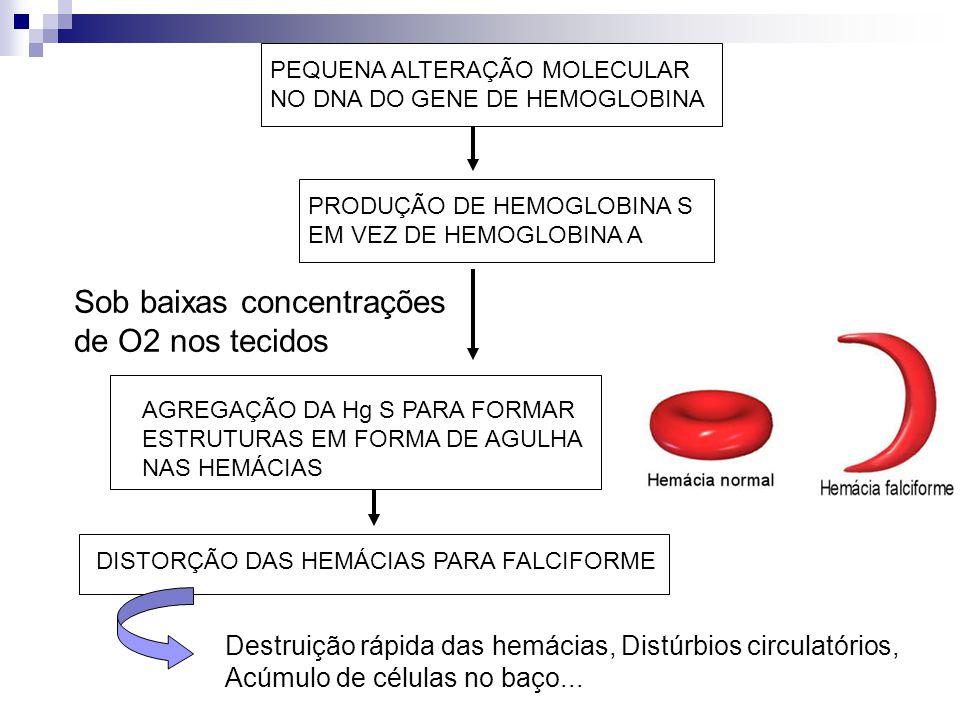 PEQUENA ALTERAÇÃO MOLECULAR NO DNA DO GENE DE HEMOGLOBINA PRODUÇÃO DE HEMOGLOBINA S EM VEZ DE HEMOGLOBINA A AGREGAÇÃO DA Hg S PARA FORMAR ESTRUTURAS E