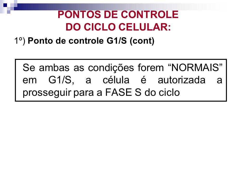 1º) Ponto de controle G1/S (cont) Se ambas as condições forem NORMAIS em G1/S, a célula é autorizada a prosseguir para a FASE S do ciclo PONTOS DE CON