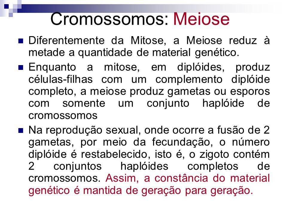 Diferentemente da Mitose, a Meiose reduz à metade a quantidade de material genético. Enquanto a mitose, em diplóides, produz células-filhas com um com