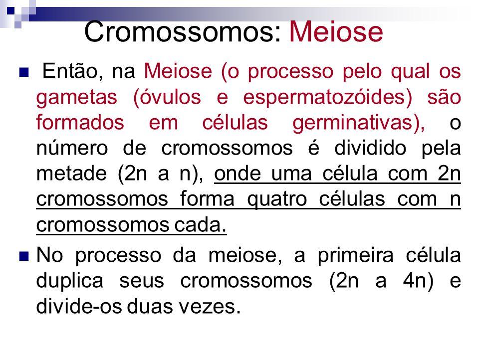 Então, na Meiose (o processo pelo qual os gametas (óvulos e espermatozóides) são formados em células germinativas), o número de cromossomos é dividido
