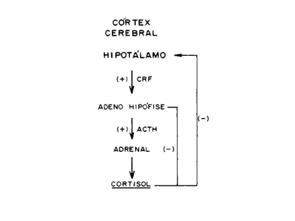 Corticóides Efeitos Farmacológicos dos Glicocorticóides Efeitos Metabólicos
