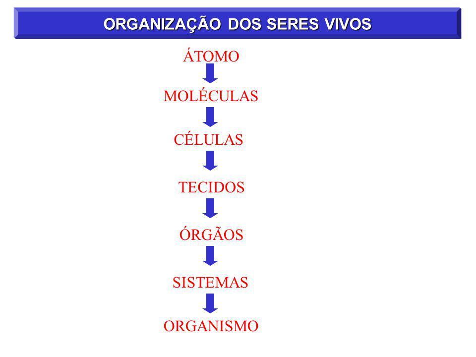 ORGANIZAÇÃO DOS SERES VIVOS ÁTOMO MOLÉCULASCÉLULAS ÓRGÃOSSISTEMAS ORGANISMO TECIDOS